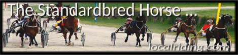 The Standardbred Horse Breed - An excellent trotter