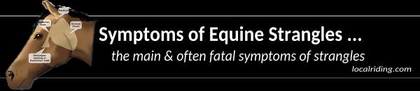 Symptoms of horse strangles