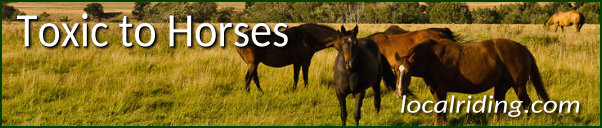 Lupines &other plants toxic to horses