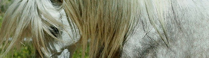 Andalusian horse breed classification