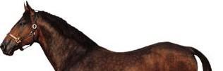 Cleveland Bay Horse Breed