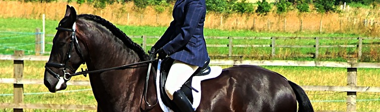 Native Horse Breed Dressage