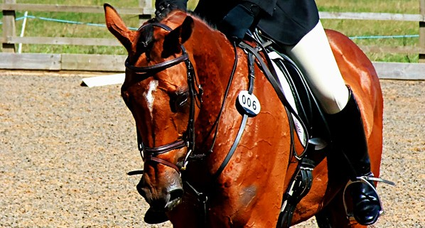 Competitive Dressage Riding - Prelim 4