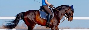 Dressage Tips - training and schooling for points