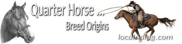 Quarter Horse Breed Origins