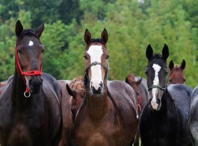 The Grange Equine Therapy - 21598262