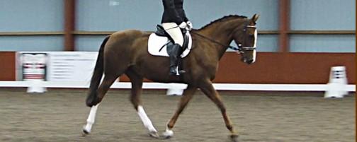 Dressage Test - Winnie 140811